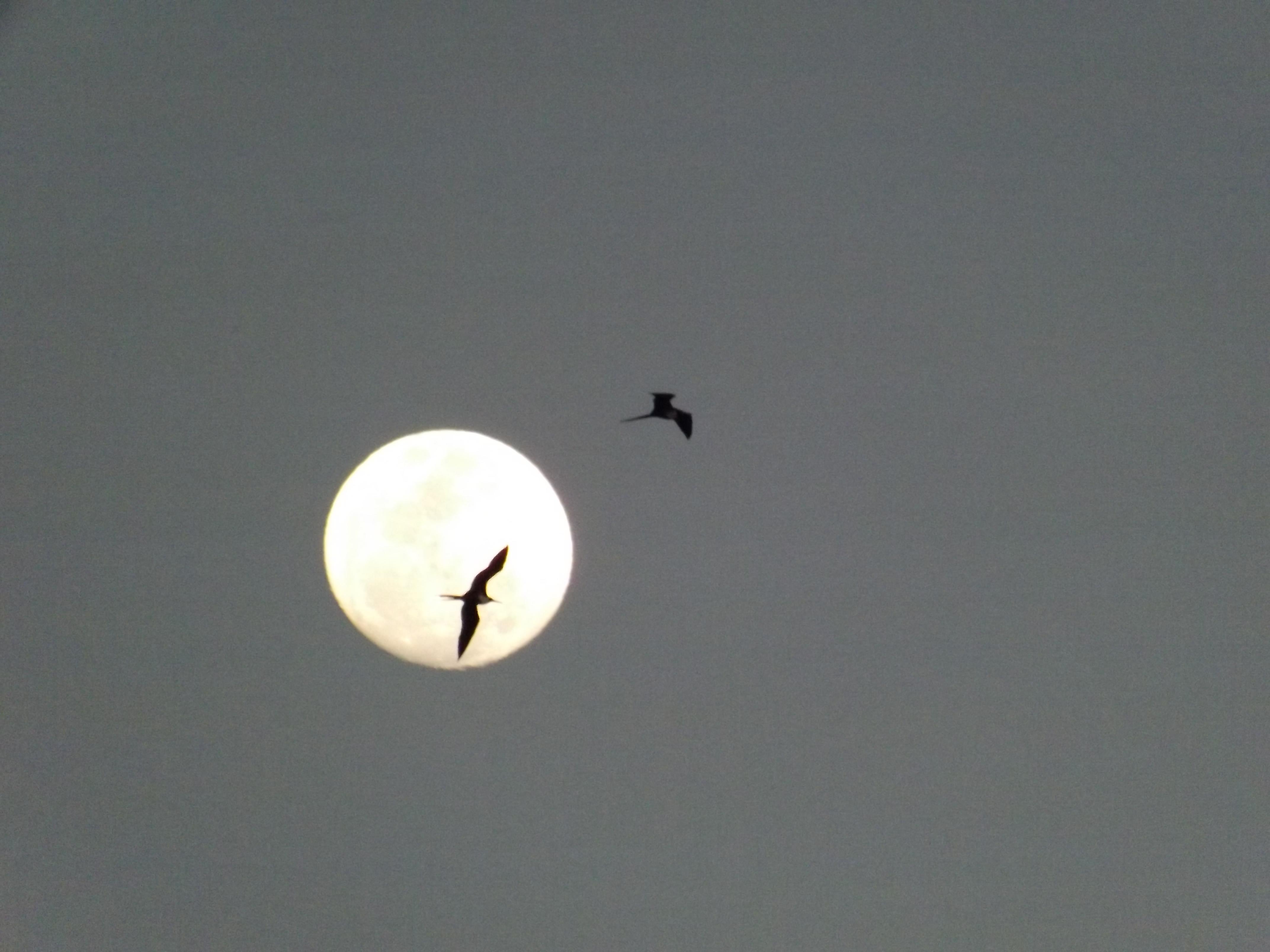 Full moon over Puerto Vallarta