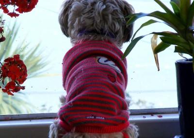 I.O.T.W.17-8-15 Ewok studies the rain